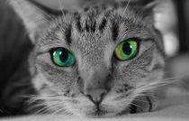 Katze by Ralf Warnecke