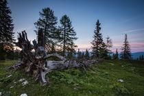 Toter Baum bei Sonnenuntergang von Lukas Kirchgasser