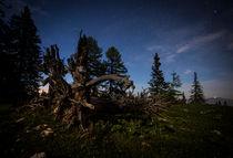 Toter Baum unter Sternenhimmel von Lukas Kirchgasser