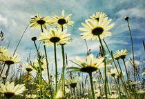 Blumenwiese von taxanin