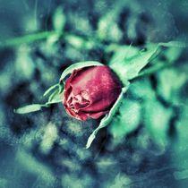 Rose_Knospe_vintage by taxanin