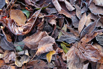 autumn leaves by mark severn