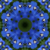 Blaues Rittersporn Mandala von Sabine Radtke