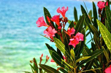 Ocean-flowers
