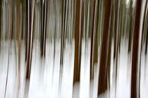 Bewegter Wald 2 by Bruno Schmidiger