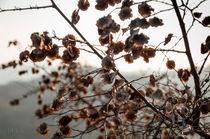 Winter leaves von Federico C.