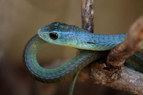 Edited-snake
