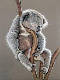 Koala Sleep von Nicole Zeug