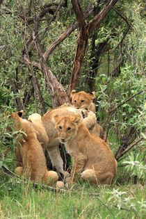 Masai Mara Lion Cubs von Aidan Moran