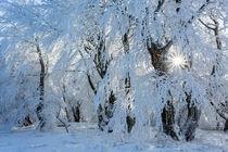 wie im Wintermärchen von moqui