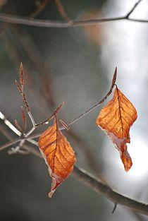 Winter181