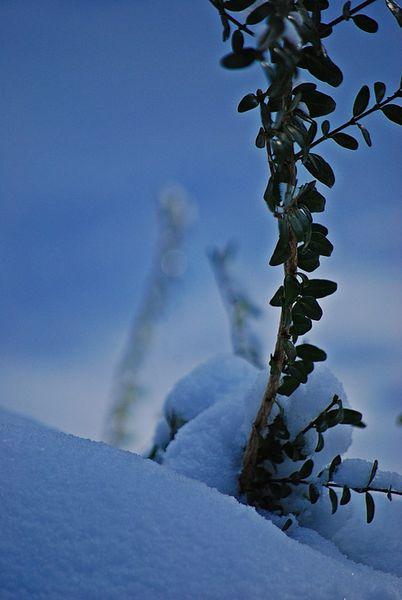 Winter169