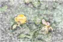 Aquarell Rose 8528 von Mario Fichtner