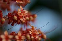 Nectar Dreams by Engeline Tan