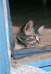 Smelly Cat by Evgeny Govorov
