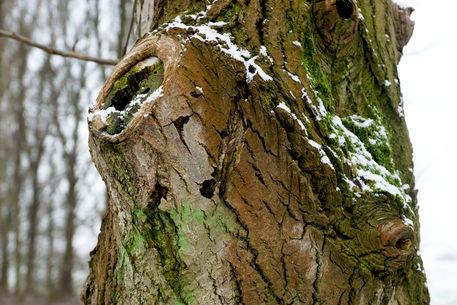 Baum-0001b