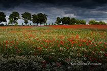 Sommerwiese von Kurt Gruhlke