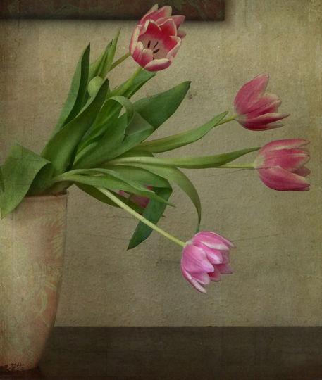 Tulpenhalb