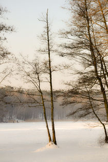 Winter an der Krumme Lanke by Marianne Drews