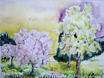 Baumblüte Voreifel von Gerhard Stolpa
