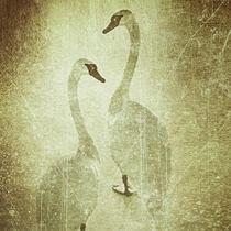'Swan Gold II' von Chris Berger