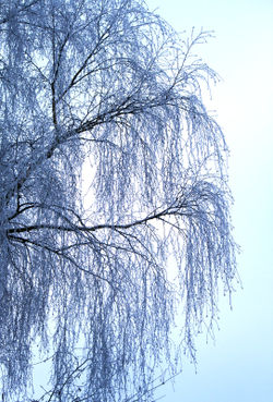 Winterweide-im-morgenlicht