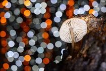 forest mushrooms by Sorin Lazar Photography