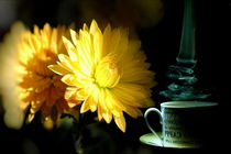 the best coffee in world von Sorin Lazar Photography