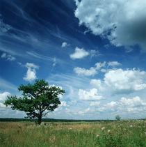 Maple in the Summer Clouds von Evgeny Govorov
