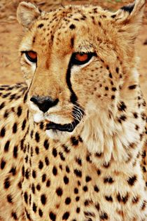 Portrait of a king by Barbara Imgrund