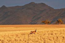 Morning oryx von Barbara Imgrund