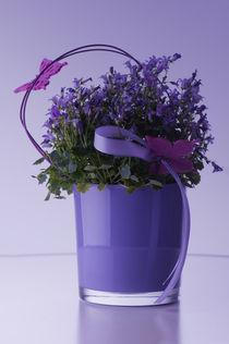 bellflower von Cornelia Dettmer