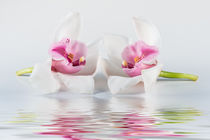 double in pink  von Cornelia Dettmer