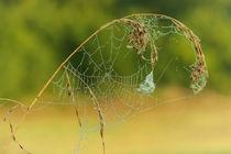 Spinnennetz  by Cornelia Dettmer