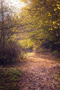 Sonnenschein im Wald von gilidhor