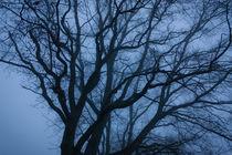 Baum im Nebel von gilidhor