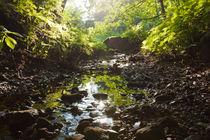 Flusslauf im Wald von gilidhor