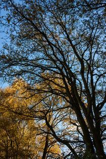 Bäume im Herbst von gilidhor