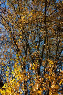 Blätter und Äste im Herbst by gilidhor