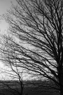 Baum in schwarz-weiß von gilidhor