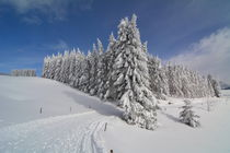 Schwarzwald - Wintertraum - Black Forest by Mark Gassner