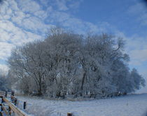 Snowscape-in-ireland-1a