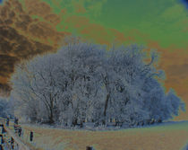 Snowscape-in-ireland-1d