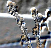 Snow-flake-1d