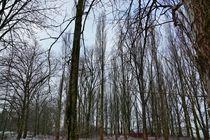 Etwas Winter von leddermann