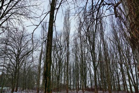 Winterlandschaft-0010b