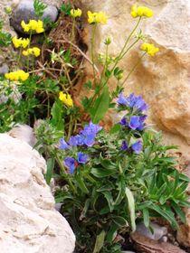 Blumen-Versteck by Jens Hoffmann