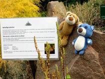 2 Teddys im botanischen Garten von Kopenhagen by Olga Sander
