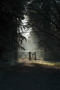 Sunlit Gateway 2 von David Tinsley