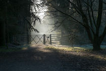 Sunlit Gateway von David Tinsley